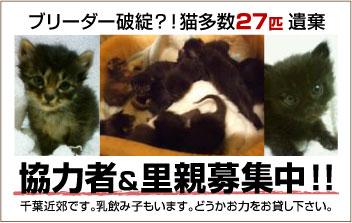 chibacats_help_please-8fa0b.jpg